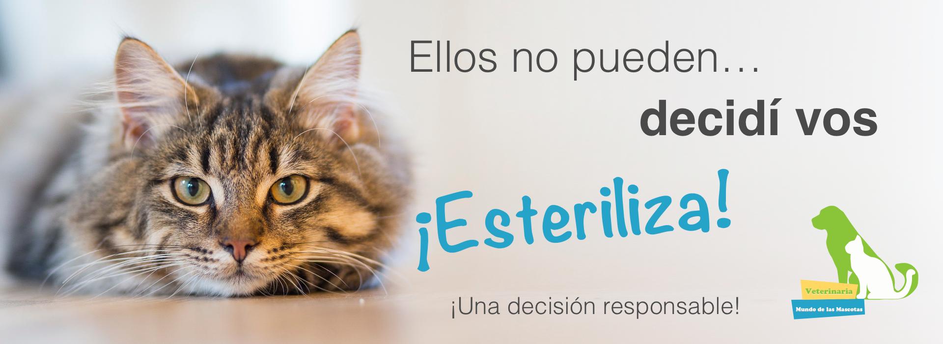 Esteriliza