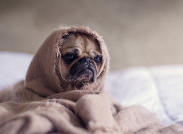 Mascotas con frio